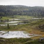 Wild Food Spring #5: Fäviken