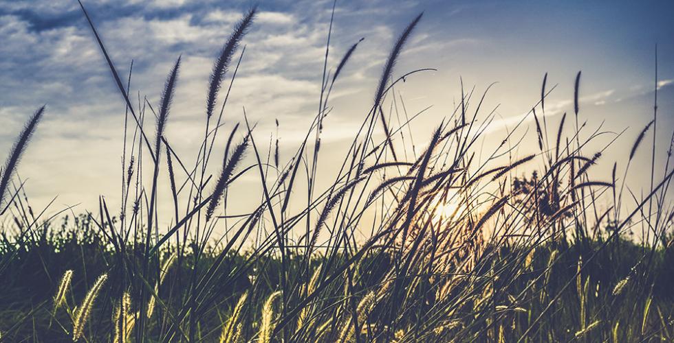 Nuannaarpoq: Thomas Wharton's Every Blade of Grass